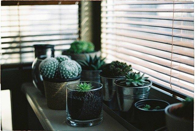květiny kaktusy