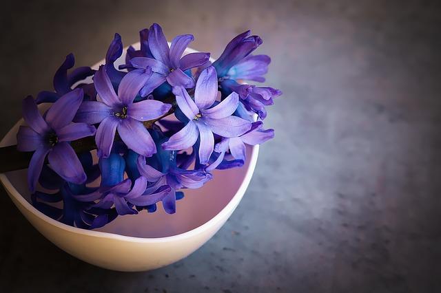 fialový květ